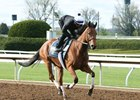 Lady Eli gallops April 7 at Keeneland