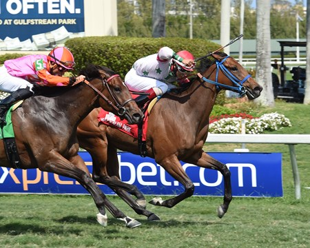 Conquest Hardcandy wins the 2017 Sanibel Island Stakes