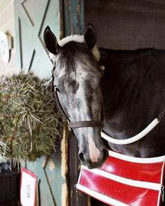 Arkansas Bill Of Sale >> Rockin Rudy - Horse Profile - BloodHorse