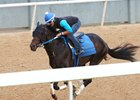 Untrapped, April 9 at Oaklawn Park