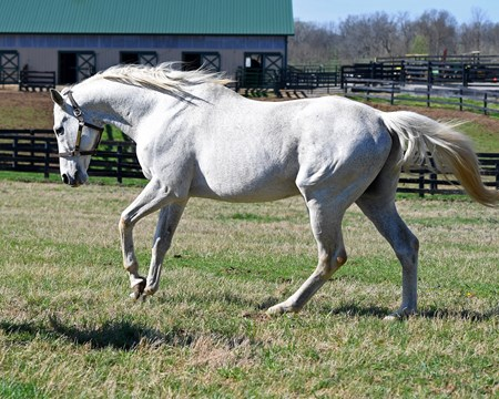 Silver Charm, now 23, at Old Friends near Georgetown, Ky., where he is celebrating the 20th anniversary of his Kentucky Derby (G1) win. Shown with Michael Blowen and his exercise rider Joe Steiner, who rode Silver Charm leading up to the Derby.