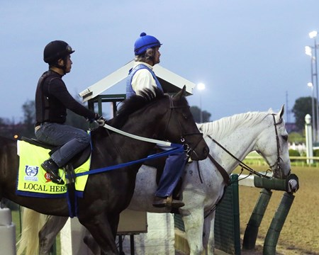 Local Hero - Gallop - Churchill Downs - 04-29-17