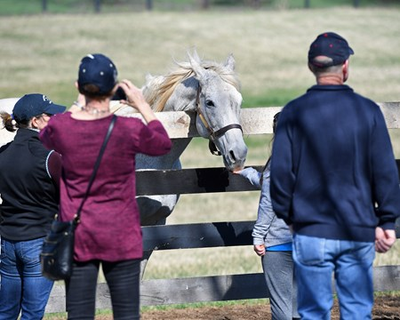 with tourists, feeding carrots. Silver Charm, now 23, at Old Friends near Georgetown, Ky., where he is celebrating the 20th anniversary of his Kentucky Derby (G1) win. Shown with Michael Blowen and his exercise rider Joe Steiner, who rode Silver Charm leading up to the Derby.