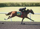 A Malibu Moon filly breezes in :20 4/5 in preparation for the Ocala Breeders' Sales spring 2-year-olds in training sale