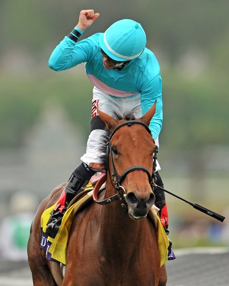 Lady Eli with Irad Ortiz win the Breeders' Cup Juvenile Fillies Turf at Santa Anita Park on October 31, 2014.