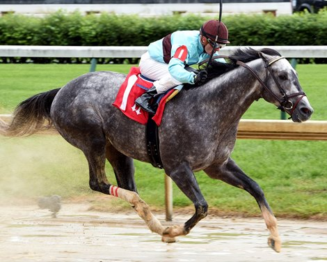 Bird Song To Enter Stud At Gainesway Bloodhorse