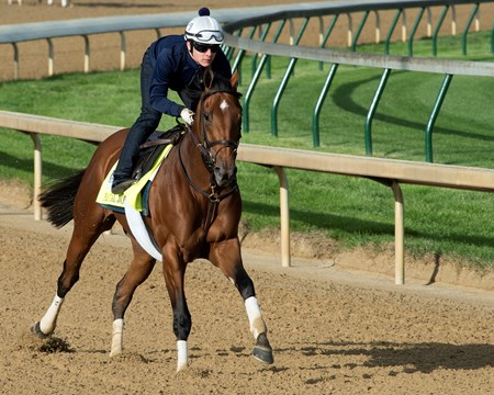 Practical Joke Derby and Oaks contenders in the morning at Churchill Downs  May 3, 2017 Churchill Downs in Louisville, Ky.