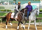 Miss Sky Warrior at Churchill Downs May 3