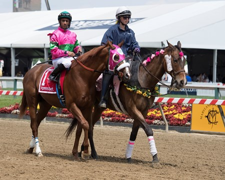 Dolphus Shaman Ghost with Javier Castellano (outside) and Dolphus with Rajiv Maragh in Xpressbet Pimlico Special (G3) May 19, 2017 Baltimore in Pimlico, Maryland.