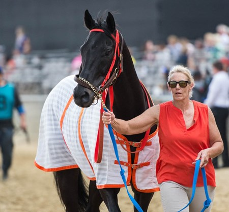 Ben's Cat before the Jim Mckay Turf Sprint