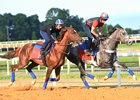 Irish War Cry (outside) works in company with Ascend at Fair Hill Training Center