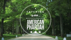 Catching up with American Pharoah