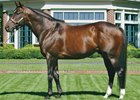Langfuhr is the 11th leading sire of 2007.