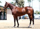 A California-bred Animal Kingdom colt sold for $245,000 to top the sale