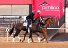 Always Dreaming gets his first feel of the Pimlico surface May 10