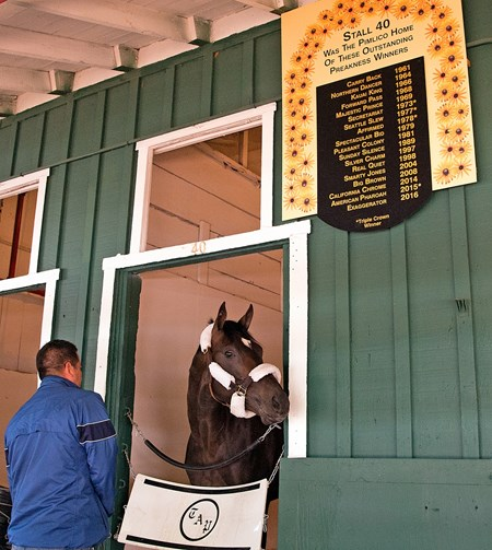 Always Dreaming Arrives at Pimlico on May 9, 2017