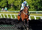 Scorpiancer rolled to victory in the Calvin Houghland Iroquois Hurdle in May