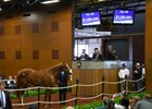 Curlin Colt Sets Midlantic Record at $1.5 Million
