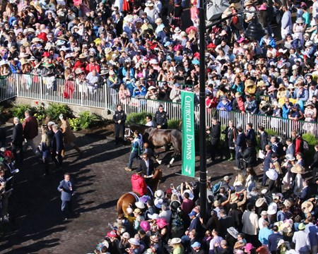 Always Dreaming wins the 2017 Kentucky Derby