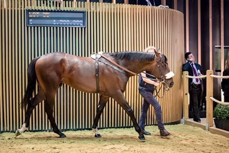 Lot 35, 2017 Arqana Sale