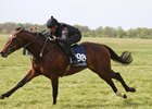 A Kodiac colt topped the session at 240,000 guineas