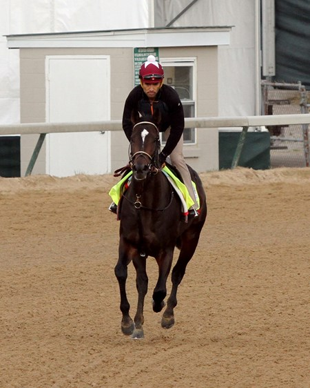 McCraken on the track at Churchill Downs on May 3, 2017.