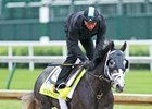 Tapwrit, galloping May 4 at Churchill Downs
