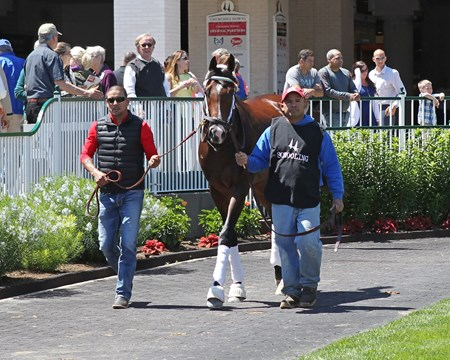 Classic Empire - Paddock Schooling - Churchill Downs - 050217