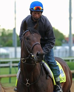 Royal Mo at Churchill Downs days prior to the Kentucky Derby