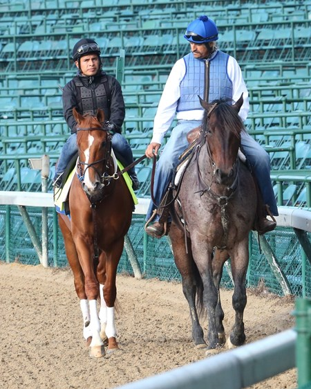 Steve Asmussen on the pony with Kentucky Derby contender Hence