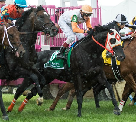 Ben's Cat breaking from the gate in the Jim McKay Turf Sprint on Black Eyed Susan Day