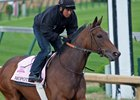 Mopotism galloping at Churchill Downs