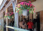 Fasig-Tipton Midlantic Under Tack Show Kicks Off