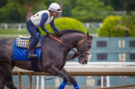 Arrogate training at Santa Anita.