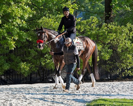 Term of Art Preakness contenders at Pimlico.  May 17, 2017