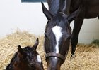 Zenyatta foaled a Medaglia d'Oro filly May 9 at Lane's End Farm