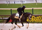 Always Dreaming gallops at Pimlico