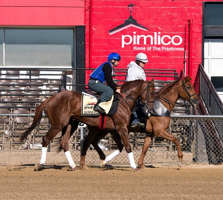Gunnevera - Pimlico - May 15, 2017