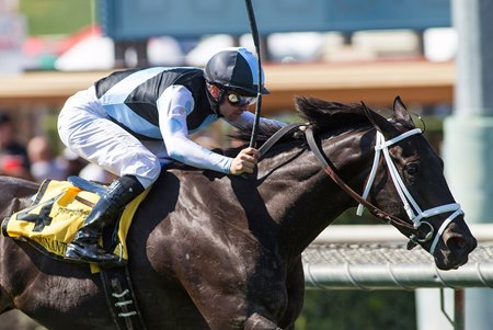 Illuminant wins the grade 2 Monrovia Stakes May 27 at Santa Anita