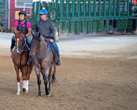 Hence Preakness contenders at Pimlico.  May 17, 2017