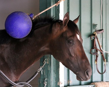Always Dreaming playing with the Jolly Ball at Pimlico on May 19, 2017.