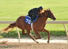 Hip 79 breezes a furlong in :10 flat during Fasig-Tipton's Midlantic sale undertack show