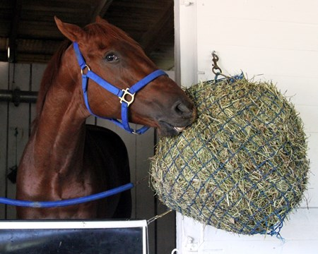 Gunnevera having his lunch on May 2, 2017.