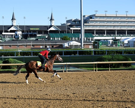 State of Honor Derby and Oaks contenders in the morning at Churchill Downs  May 2, 2017 Churchill Downs in Louisville, Ky.