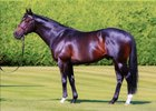 Bated Breath at Banstead Manor Stud in England