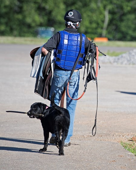 Dog Friendly, dog has stick—Whip in mouth