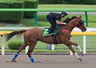 Contentment works over the Tokyo Racecourse main track June 1