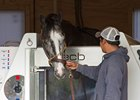 Tapwrit enjoys a spa treatment June 9 at Belmont Park
