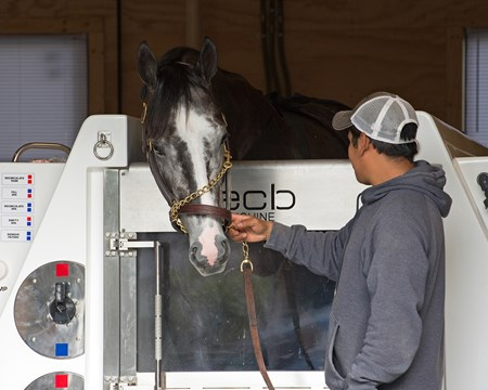 Tapwrit in equine water therapy Belmont works at Belmont Park.