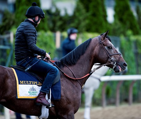 Multiplier is out for his morning exercise before the Belmont Stakes June 7, 2017 at Belmont Park in Elmont, N.Y.